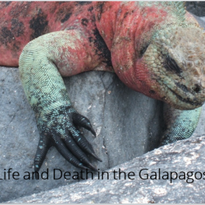 Life and Death in the Galapagos